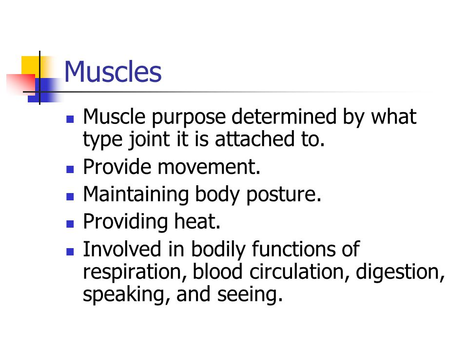 Muscles Muscle purpose determined by what type joint it is attached to. Provide movement. Maintaining body posture.