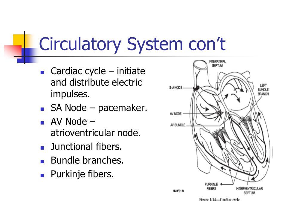 Circulatory System con't