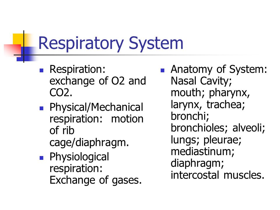 Respiratory System Respiration: exchange of O2 and CO2.