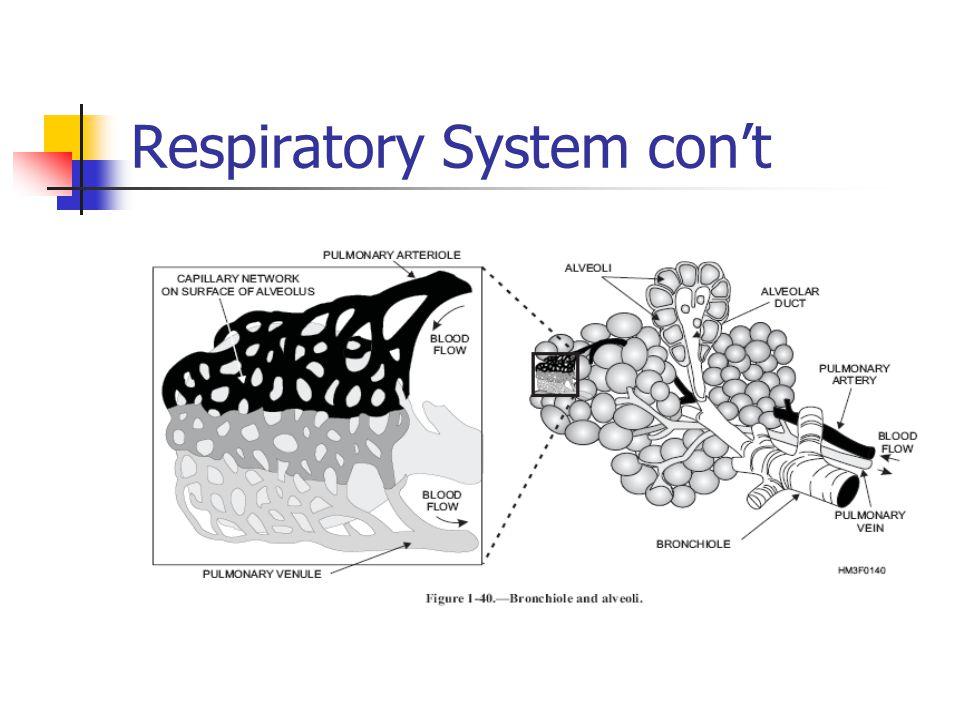 Respiratory System con't