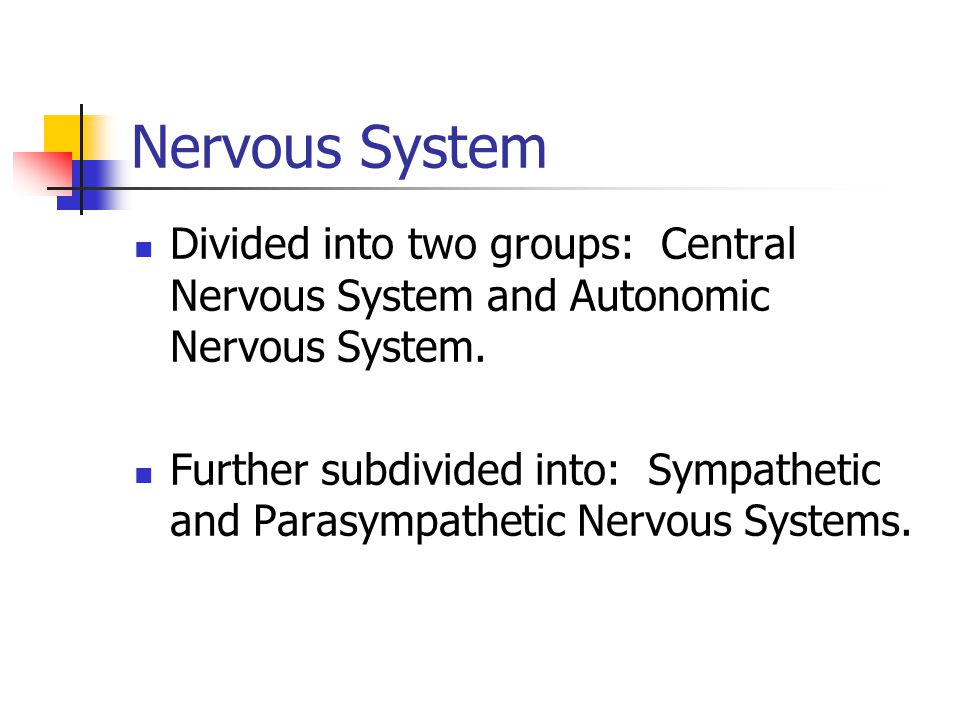 Nervous System Divided into two groups: Central Nervous System and Autonomic Nervous System.