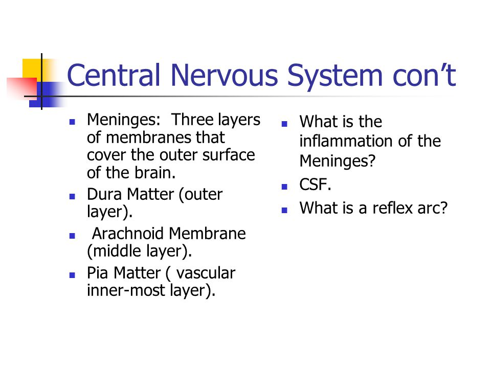 Central Nervous System con't