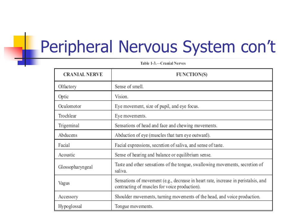 Peripheral Nervous System con't