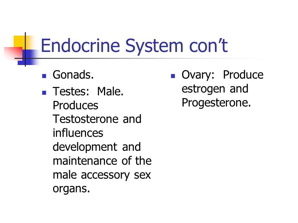 Endocrine System con't