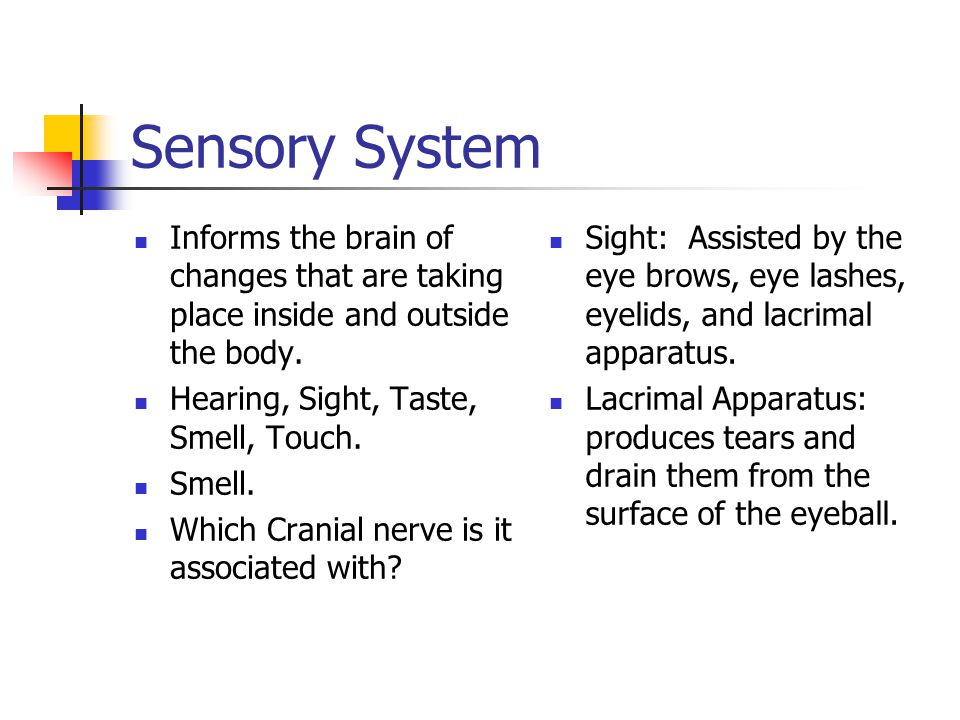 Sensory System Informs the brain of changes that are taking place inside and outside the body. Hearing, Sight, Taste, Smell, Touch.