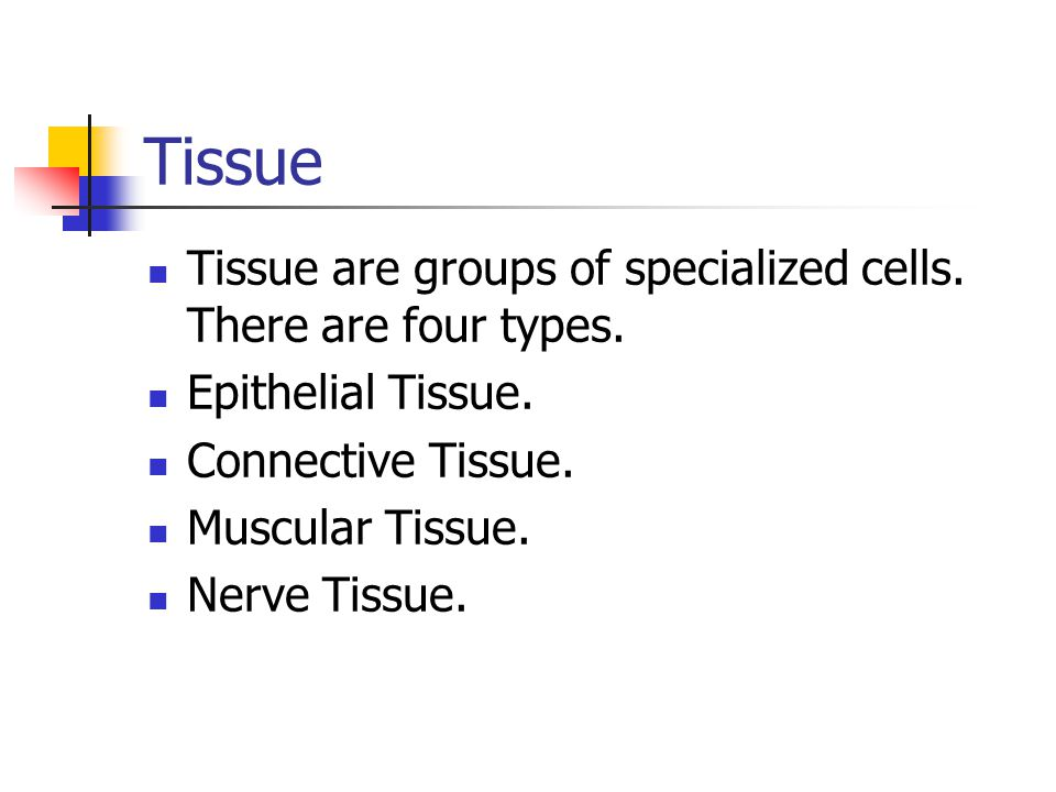Tissue Tissue are groups of specialized cells. There are four types.