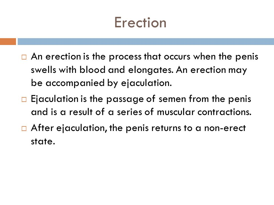 Erection An erection is the process that occurs when the penis swells with blood and elongates. An erection may be accompanied by ejaculation.