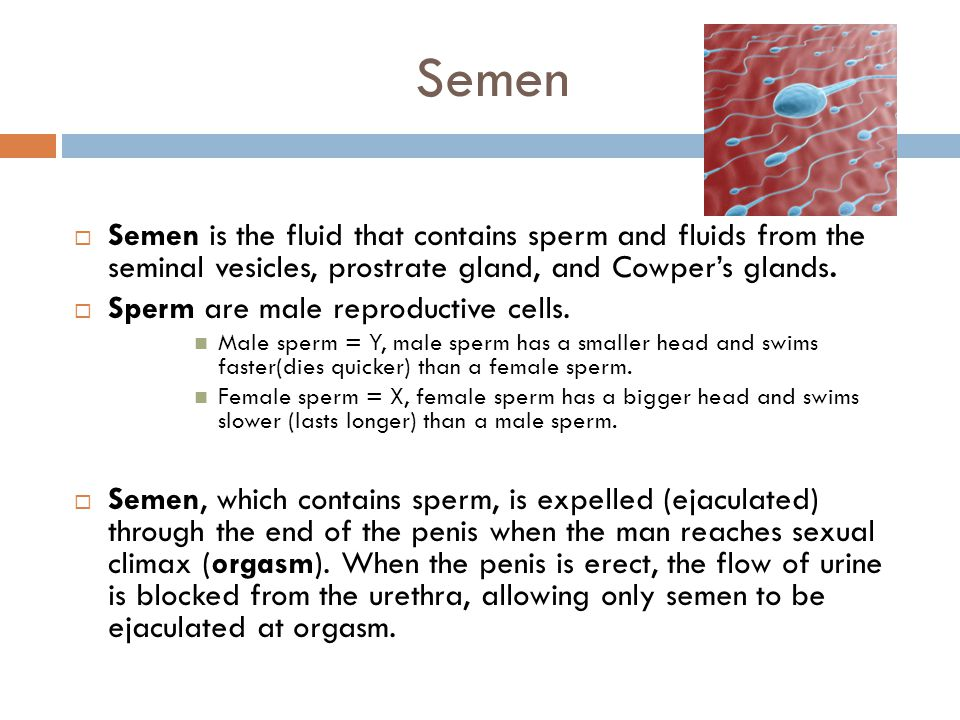 Semen Semen is the fluid that contains sperm and fluids from the seminal vesicles, prostrate gland, and Cowper's glands.