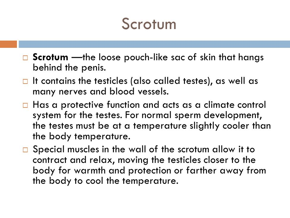 Scrotum Scrotum —the loose pouch-like sac of skin that hangs behind the penis.