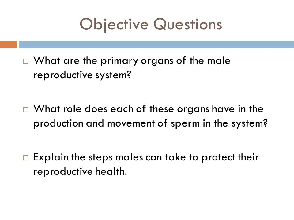 Objective Questions What are the primary organs of the male reproductive system