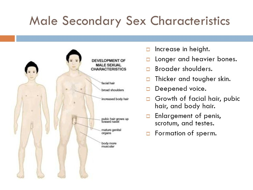 Male Secondary Sex Characteristics