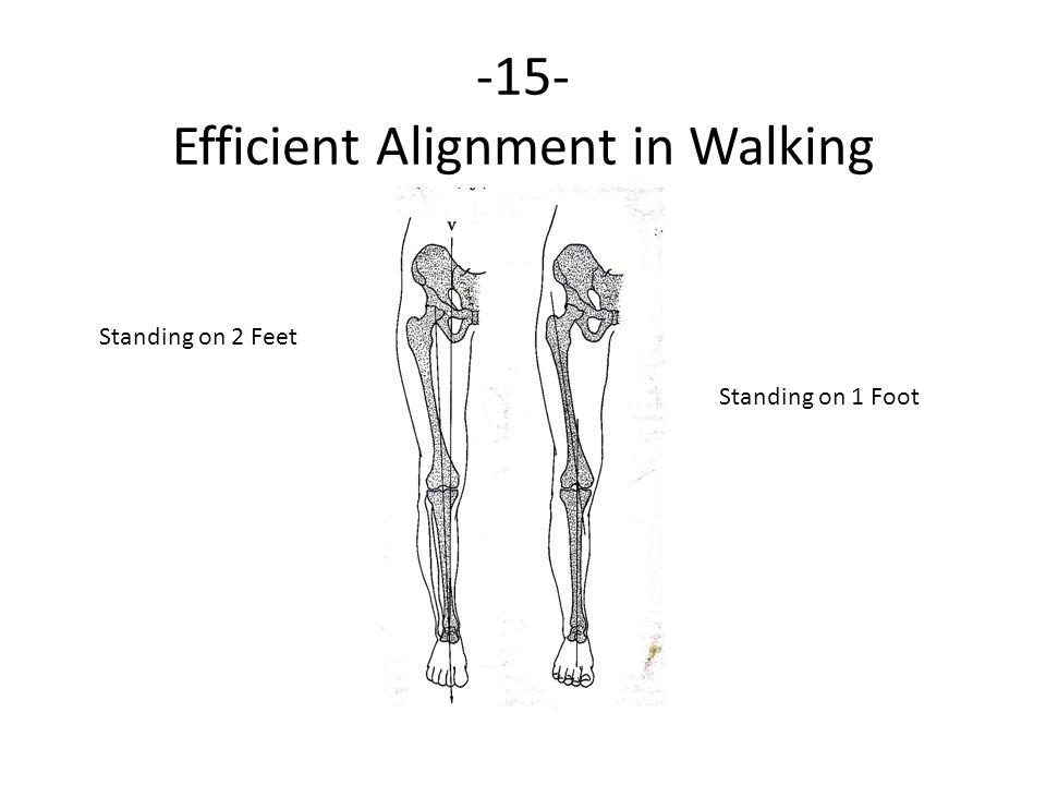 -15- Efficient Alignment in Walking