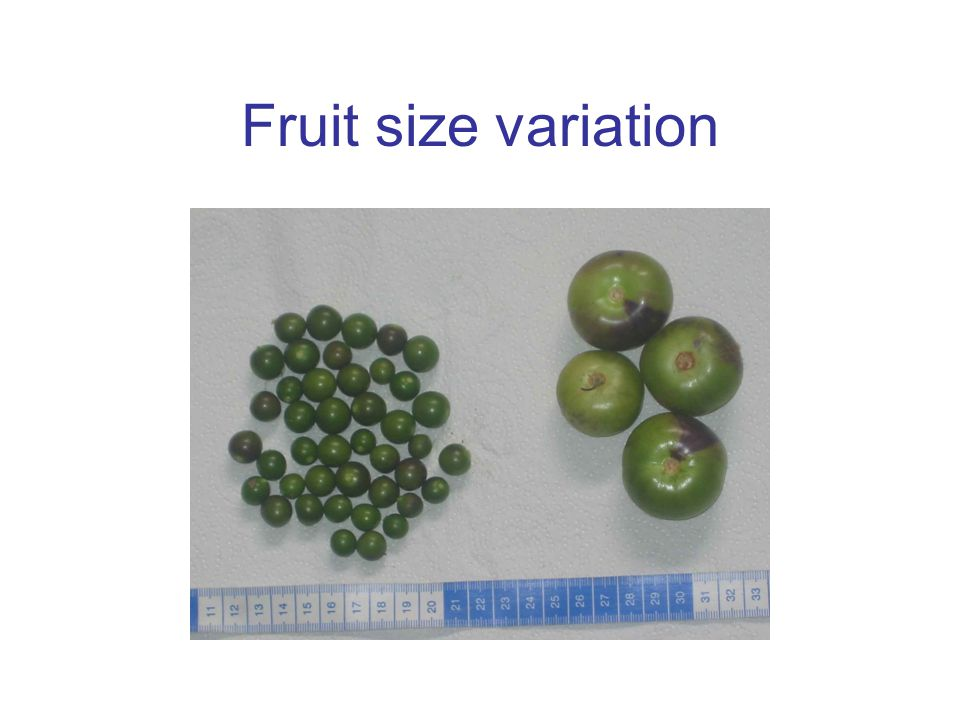 Fruit size variation