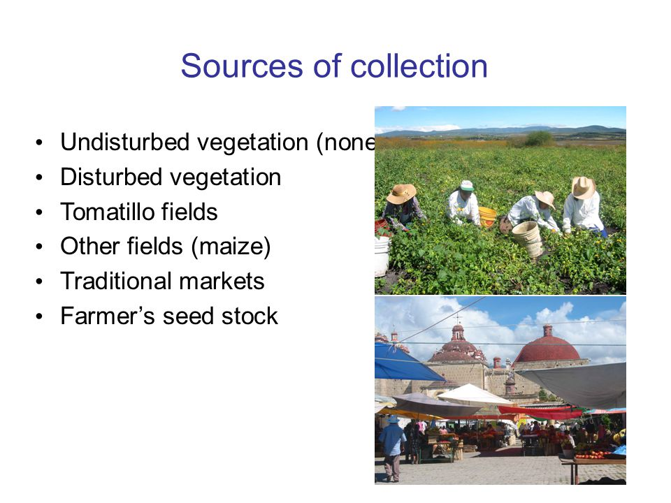 Sources of collection Undisturbed vegetation (none)