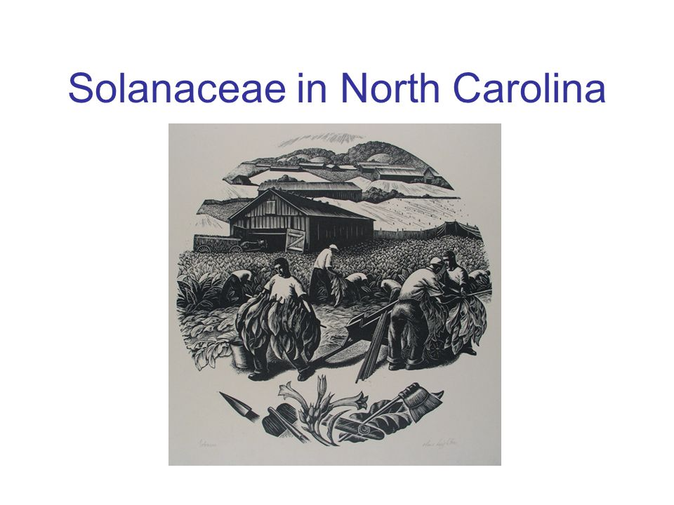 Solanaceae in North Carolina