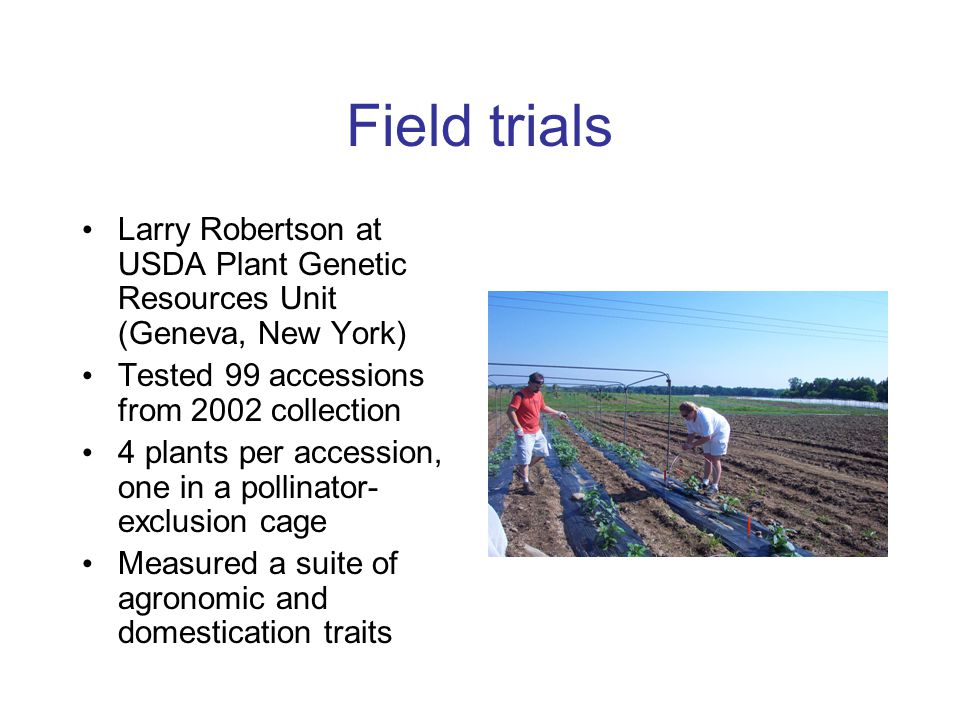 Field trials Larry Robertson at USDA Plant Genetic Resources Unit (Geneva, New York) Tested 99 accessions from 2002 collection.