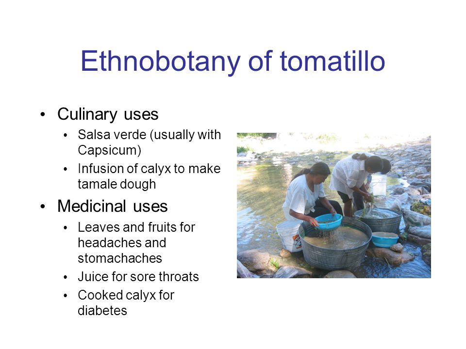 Ethnobotany of tomatillo