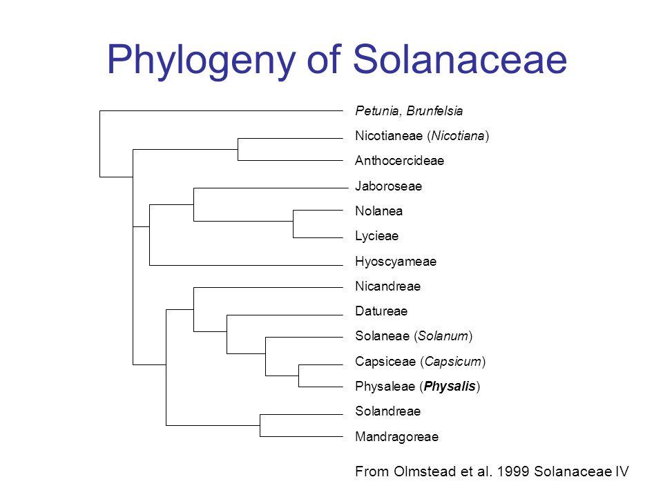 Phylogeny of Solanaceae