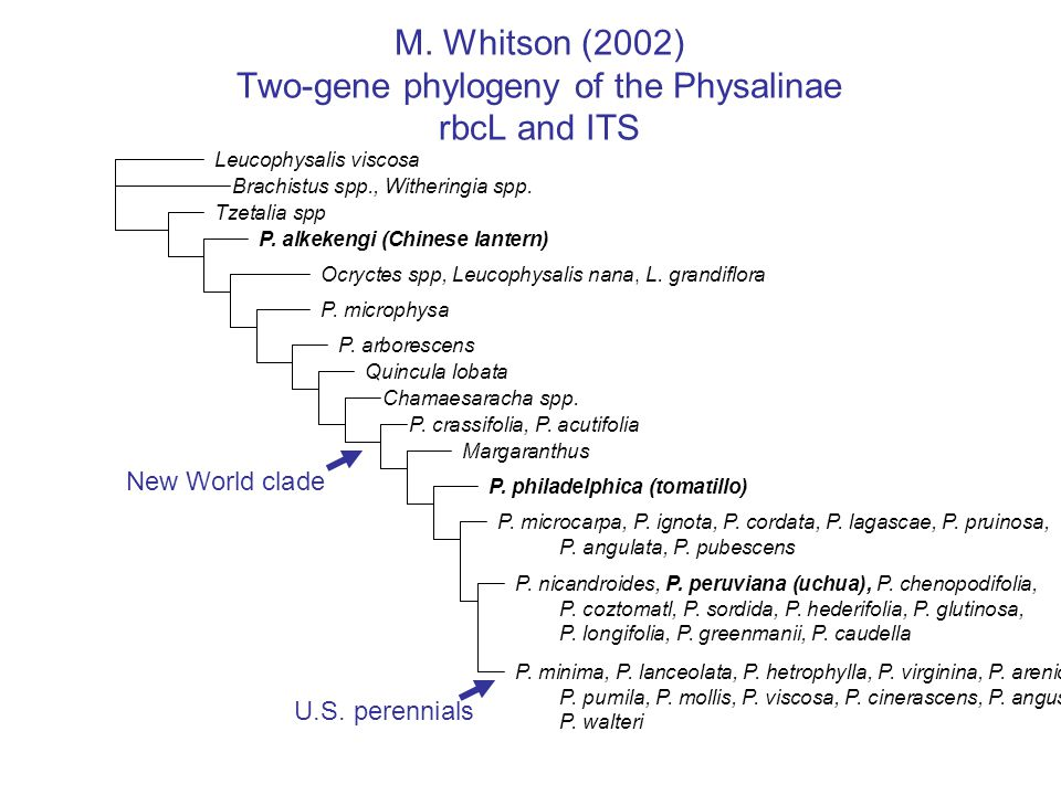 M. Whitson (2002) Two-gene phylogeny of the Physalinae rbcL and ITS