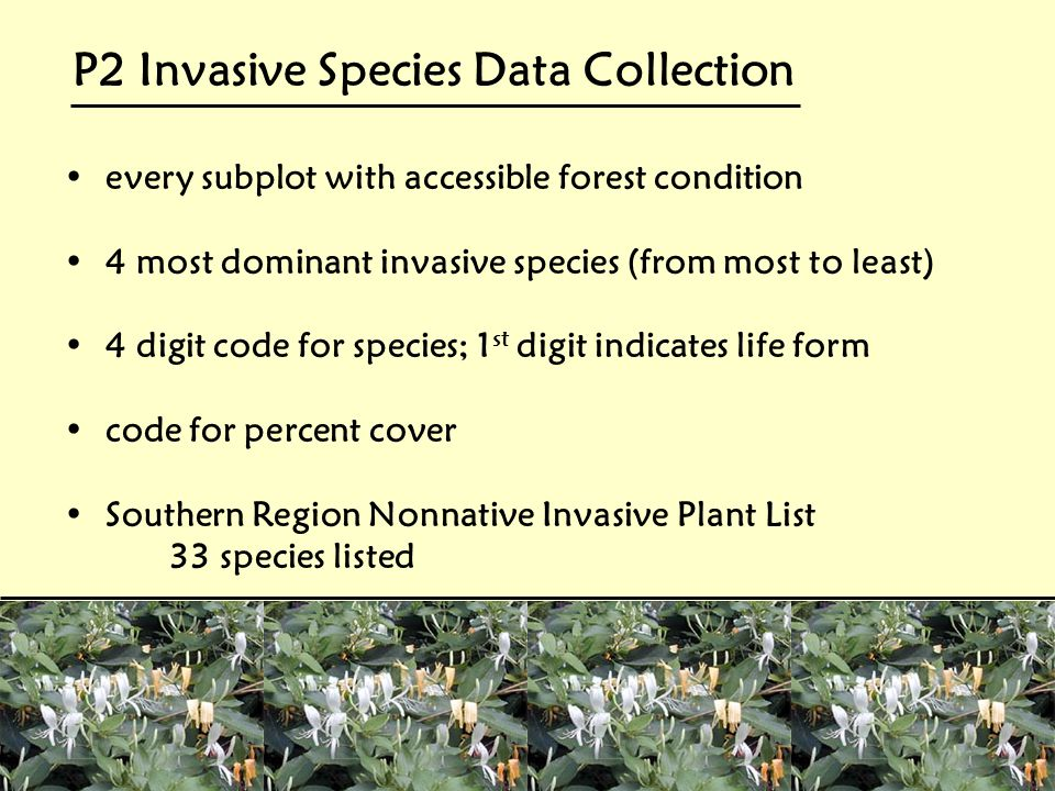 P2 Invasive Species Data Collection