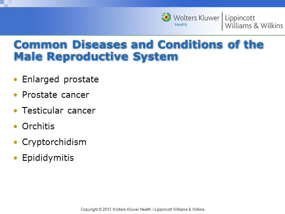 Common Diseases and Conditions of the Male Reproductive System