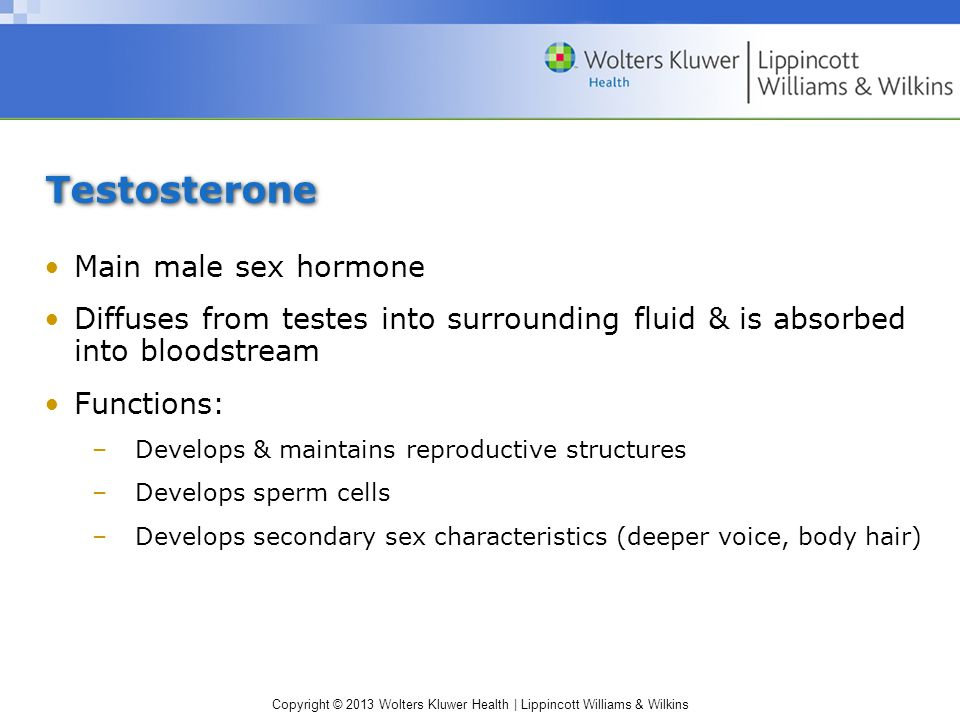 Testosterone Main male sex hormone