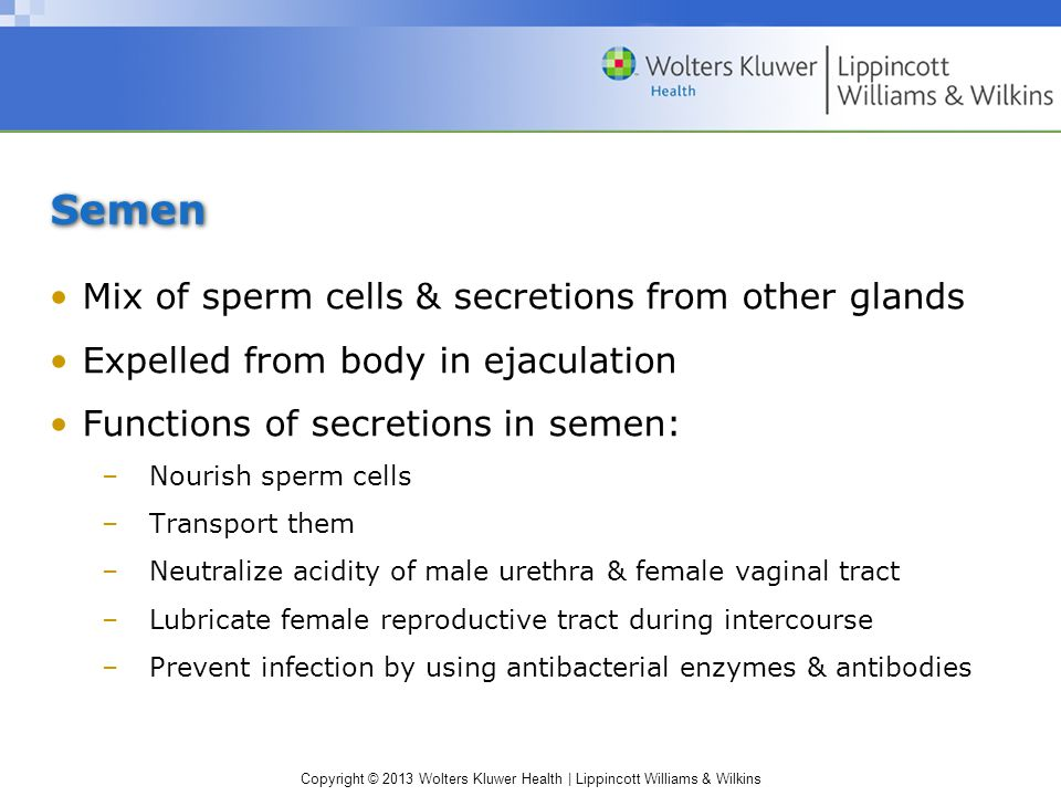Semen Mix of sperm cells & secretions from other glands