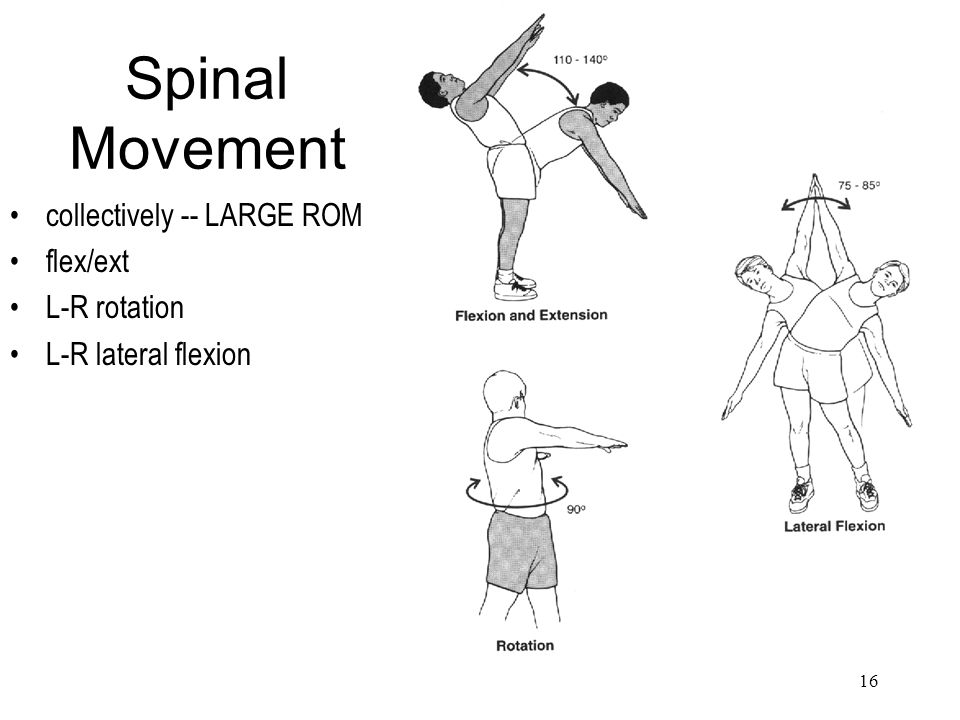 Spinal Movement collectively -- LARGE ROM flex/ext L-R rotation