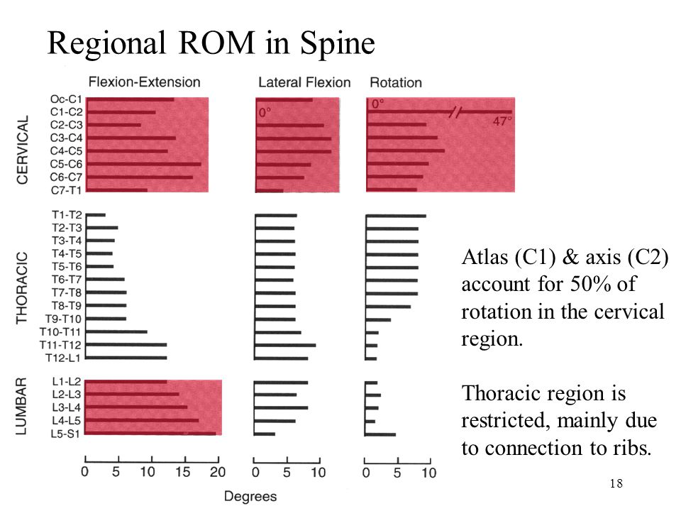Regional ROM in Spine Atlas (C1) & axis (C2) account for 50% of rotation in the cervical region. Thoracic region is restricted, mainly due.
