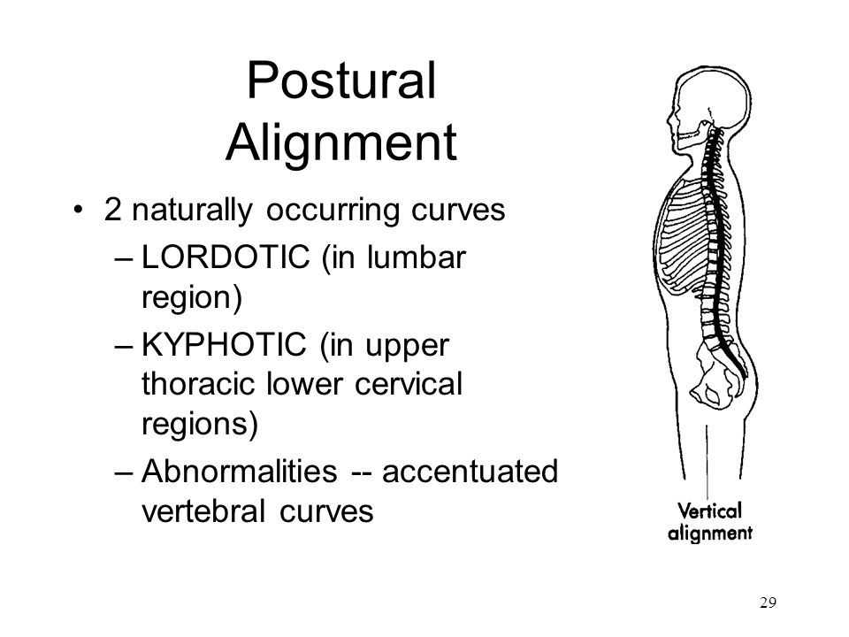 Postural Alignment 2 naturally occurring curves