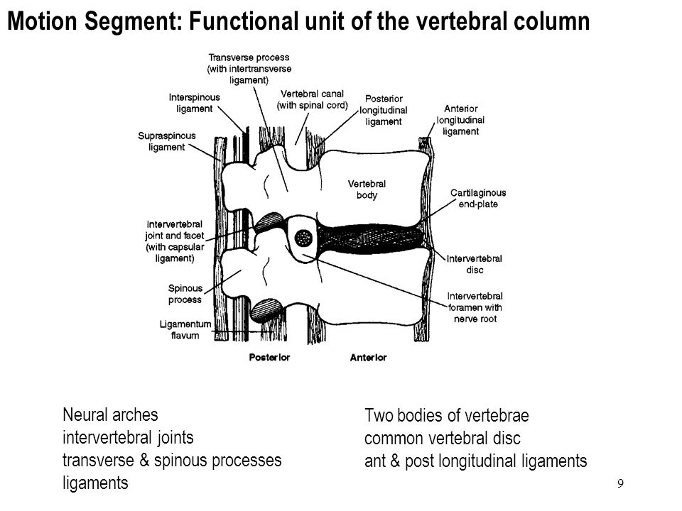 Motion Segment: Functional unit of the vertebral column
