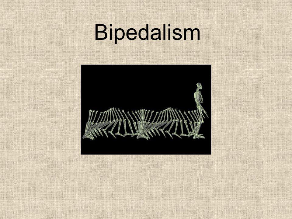 Bipedalism