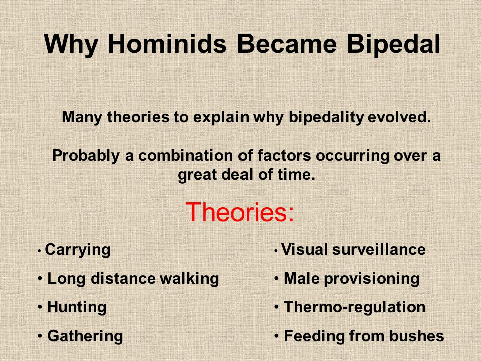 Why Hominids Became Bipedal