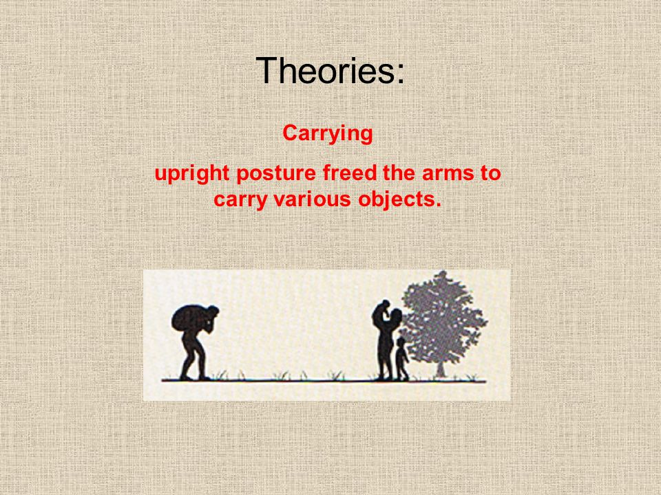 upright posture freed the arms to carry various objects.