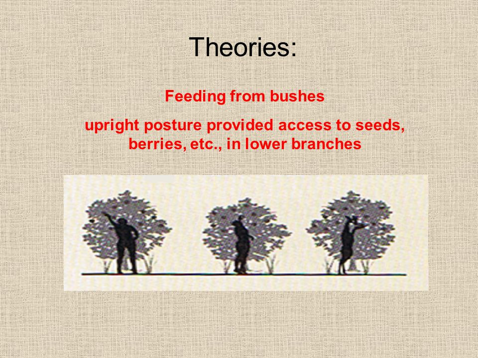 Theories: Feeding from bushes