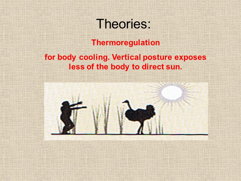 Theories: Thermoregulation
