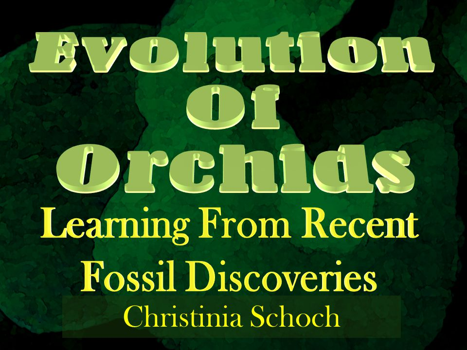 Evolution Of Orchids Learning From Recent Fossil Discoveries