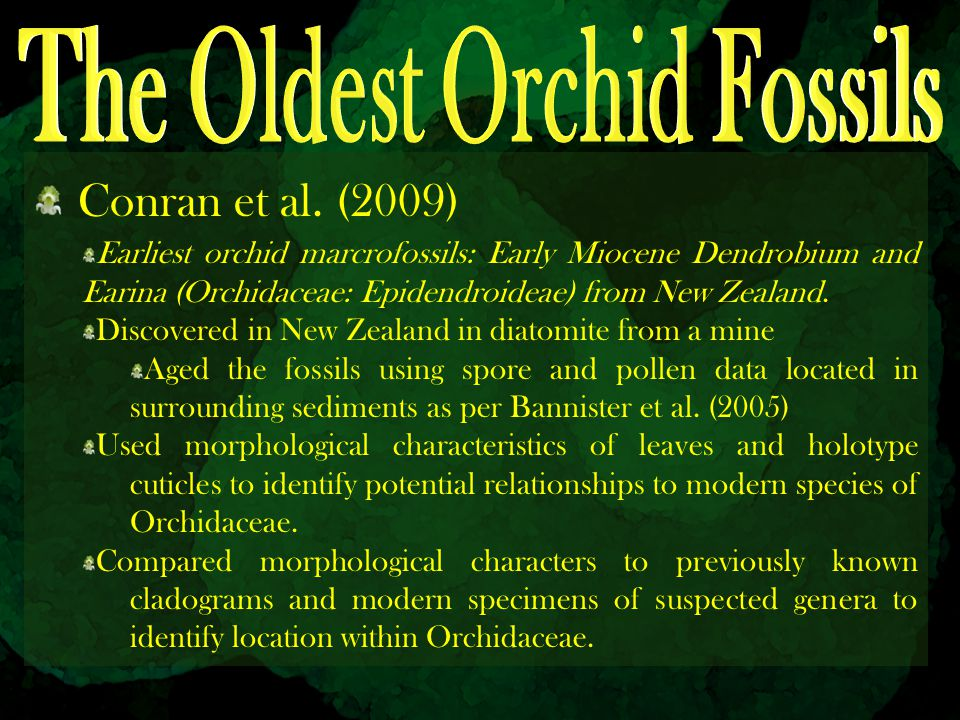 The Oldest Orchid Fossils