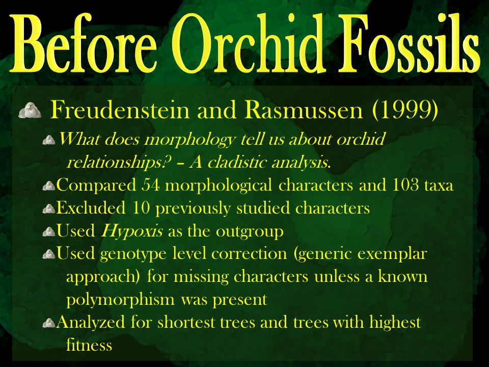 Before Orchid Fossils Freudenstein and Rasmussen (1999)