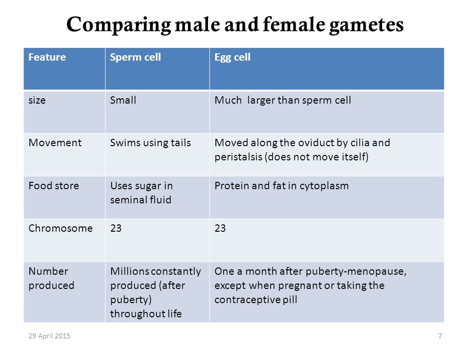 Comparing male and female gametes