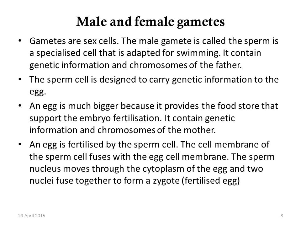 Male and female gametes