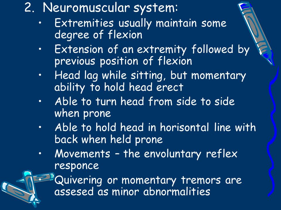 Neuromuscular system: