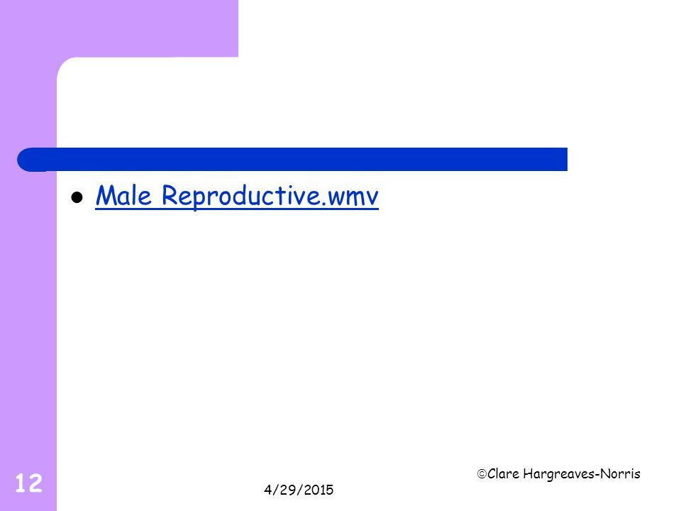 Male Reproductive.wmv 4/13/2017 Clare Hargreaves-Norris