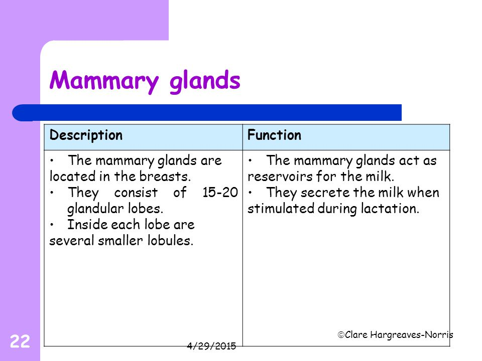 Mammary glands Description Function The mammary glands are