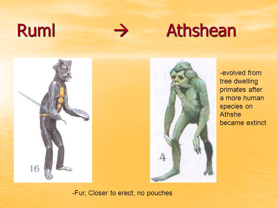 Ruml  Athshean -evolved from tree dwelling primates after a more human species on Athshe became extinct.