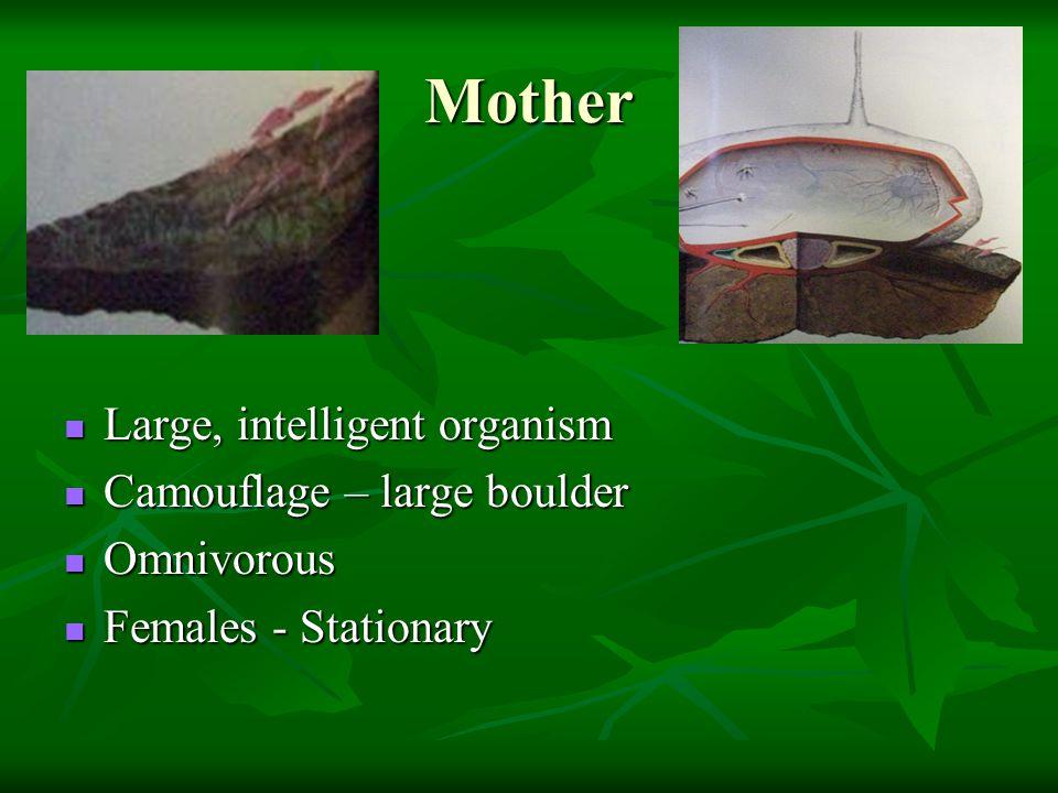 Mother Large, intelligent organism Camouflage – large boulder