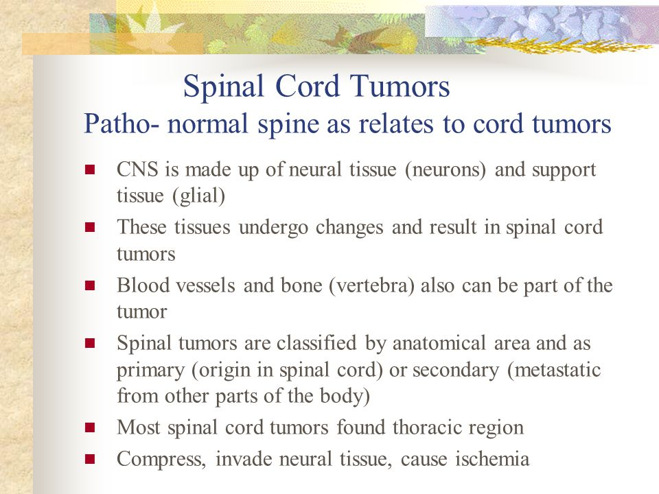 Spinal Cord Tumors Patho- normal spine as relates to cord tumors
