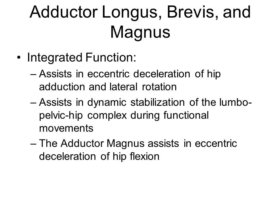 Adductor Longus, Brevis, and Magnus