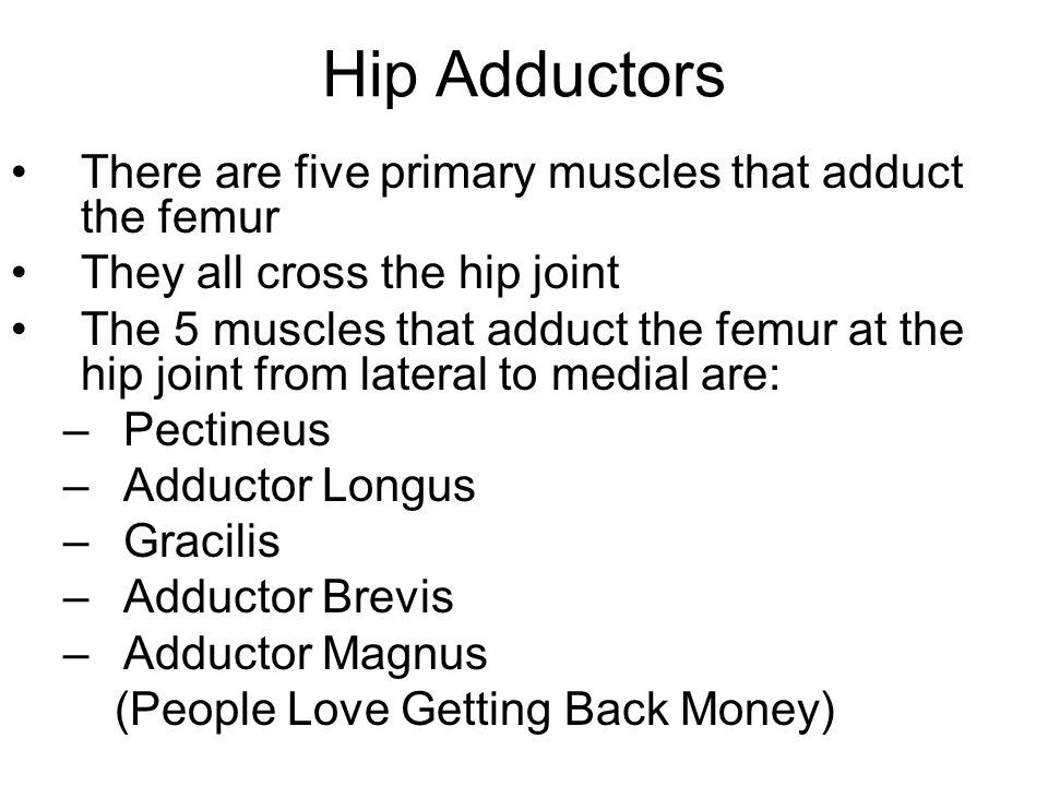 Hip Adductors There are five primary muscles that adduct the femur