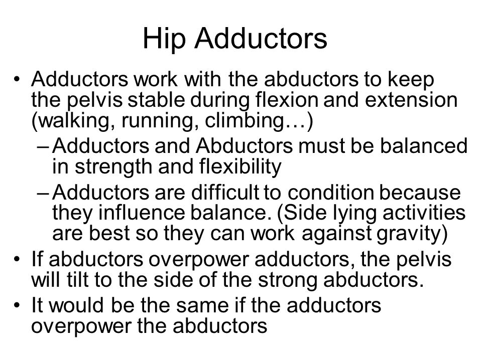 Hip Adductors Adductors work with the abductors to keep the pelvis stable during flexion and extension (walking, running, climbing…)